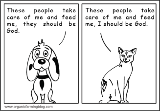 Cat_Dog_01
